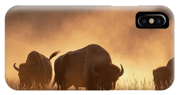 Bison In The Dust IPhone Case