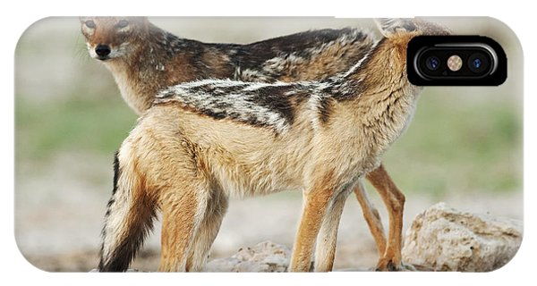 Zoology iPhone Case - Black-backed Jackal, Canis Mesomelas by Peter Fodor