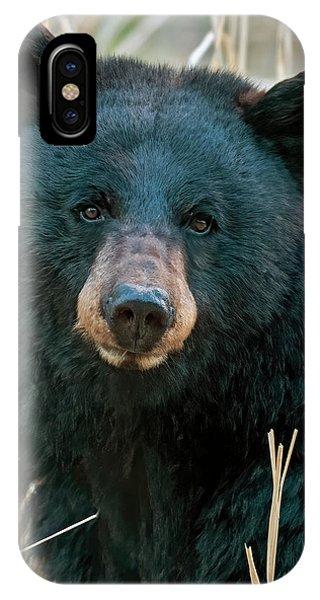 Yellowstone National Park iPhone Case - Black Bear Closeup by Gary Langley