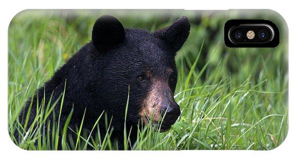 Black Bear, Spring Rain Phone Case by Ken Archer