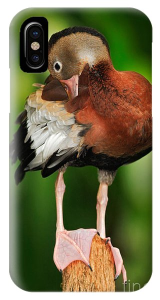 Zoology iPhone Case - Black-bellied Whistling-duck by Ondrej Prosicky