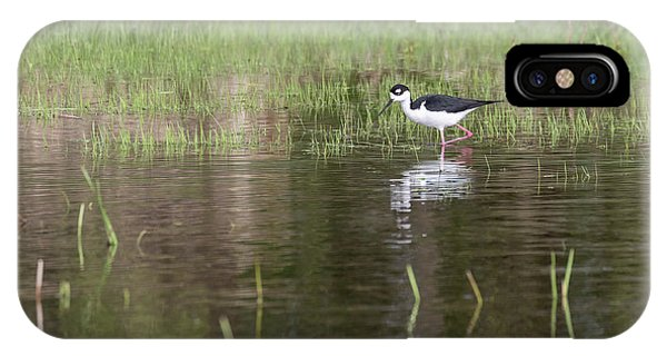 Horicon Marsh iPhone Case - Black-necked Stilt 2018-1 by Thomas Young