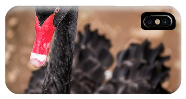 IPhone Case featuring the photograph Black Swan by Rob D