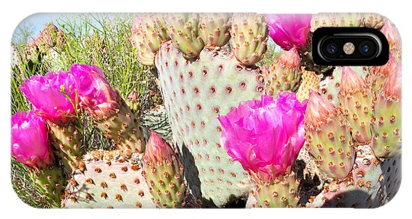 Cacti iPhone Case - Blooming Beavertail Cactus In Mojave by Anton Foltin