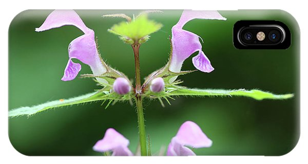 iPhone Case - Blooming Blind Nettle by Michal Boubin