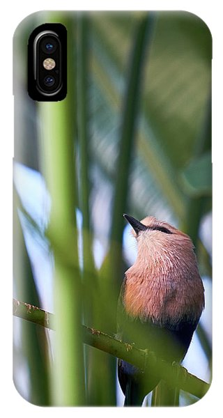 Blue-bellied Roller IPhone Case