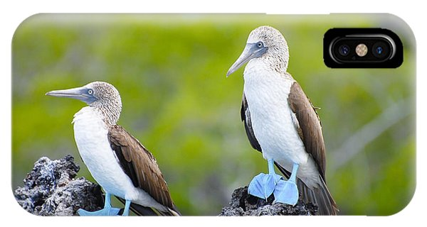 Aquatic iPhone Case - Blue Footed Boobies - Galapagos - by Adwo