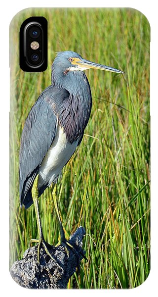 Blue Heron At Attention IPhone Case