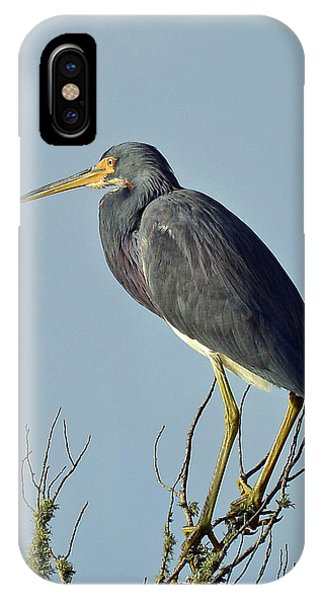 Blue Heron Atop A Branch IPhone Case
