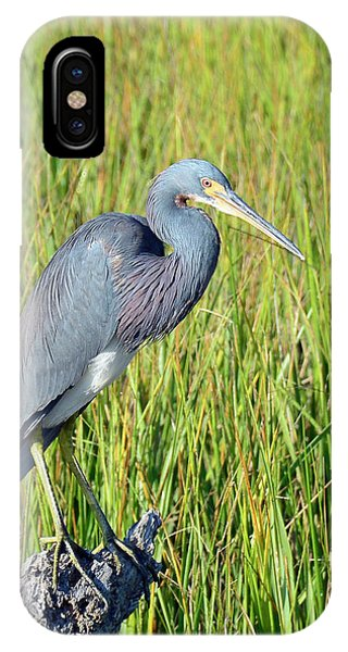 Blue Heron On The Lookout IPhone Case