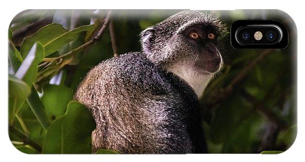 Blue Monkey, Zanzibar IPhone Case