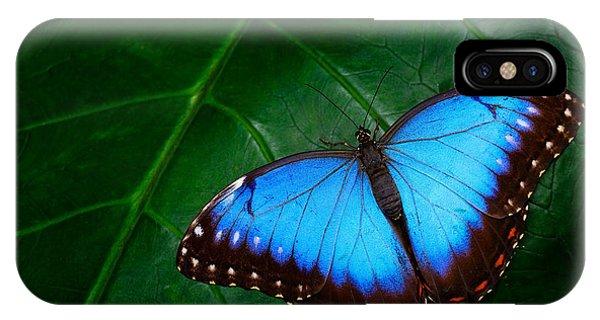 Central America iPhone Case - Blue Morpho, Morpho Peleides, Big by Ondrej Prosicky