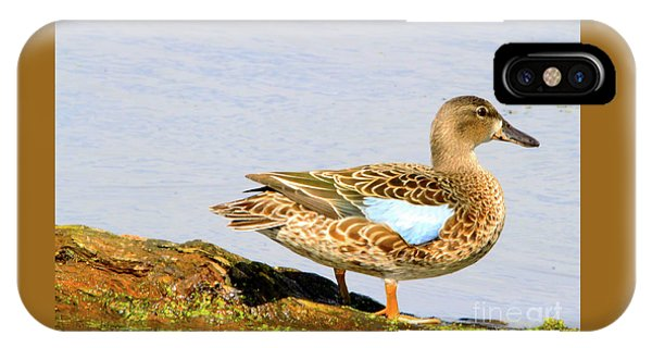 Blue-winged Teal Female Duck IPhone Case
