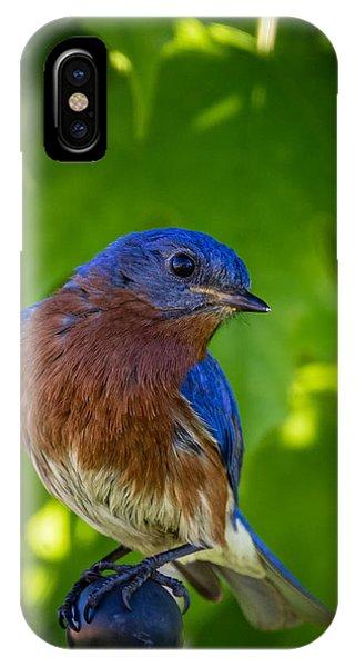 IPhone Case featuring the photograph Bluebird by Allin Sorenson