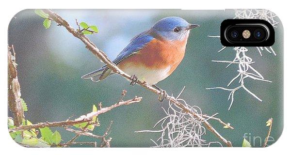 Bluebird In Dixie  IPhone Case