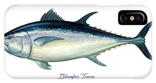 Reel iPhone Case - Bluefin Tuna by Charles Harden