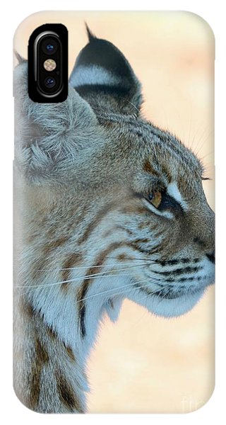 iPhone Case - Bobcat Profile by Carol Groenen