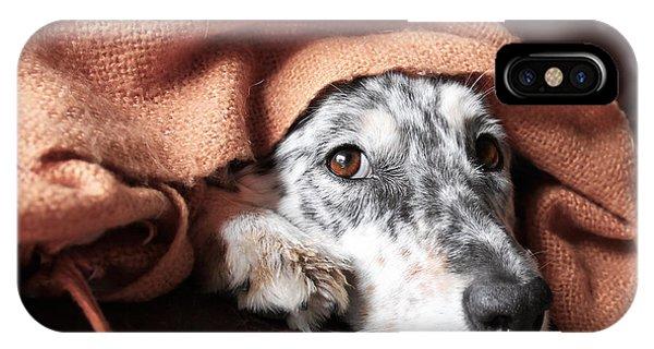 Mottled iPhone Case - Border Collie  Australian Shepherd Dog by Lindsay Helms