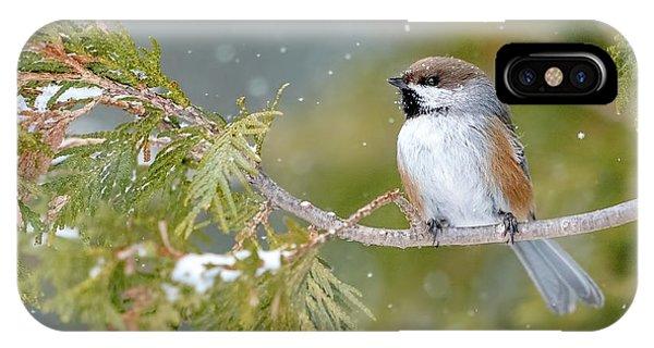 Boreal Chickadee In Winter IPhone Case