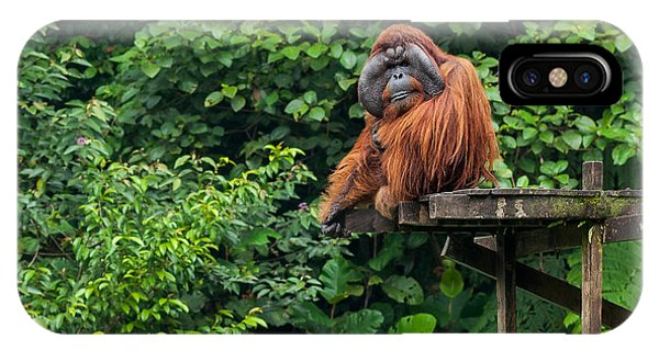 Adult iPhone Case - Borneo, Malaysia - September 6, 2014 by Nomads.team