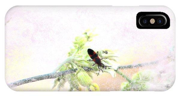 Boxelder Bug In Morning Haze IPhone Case