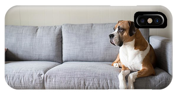Purebred iPhone Case - Boxer Mix Dog Laying On Gray Sofa At by Anna Hoychuk
