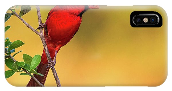 Bright Red Cardinal IPhone Case