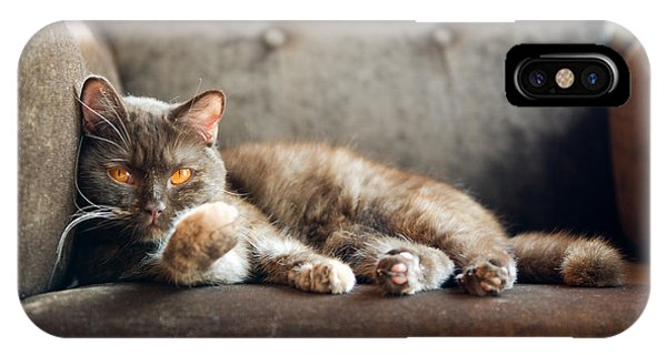Grey Background iPhone Case - British Cat At Home by Nina Anna