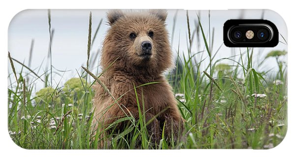 Brown Bear Cub In A Meadow IPhone Case