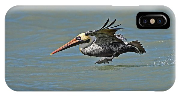 Brown Pelican Gliding IPhone Case