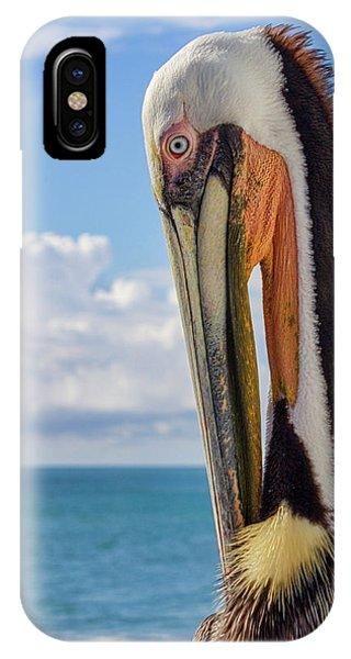 Brown Pelican Portrait IPhone Case