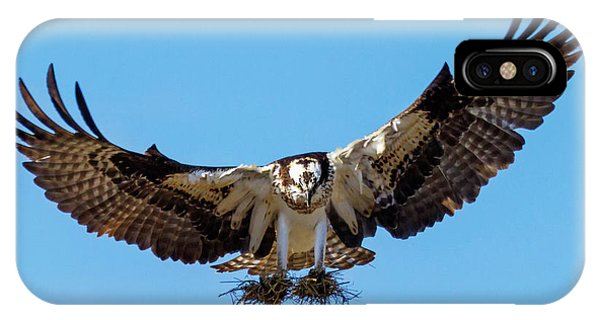 Ospreys iPhone Case - Building A Nest by Mike Dawson