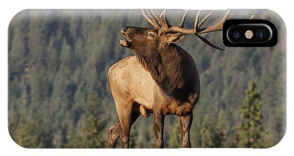 Adult iPhone Case - Bull Elk by David Osborn