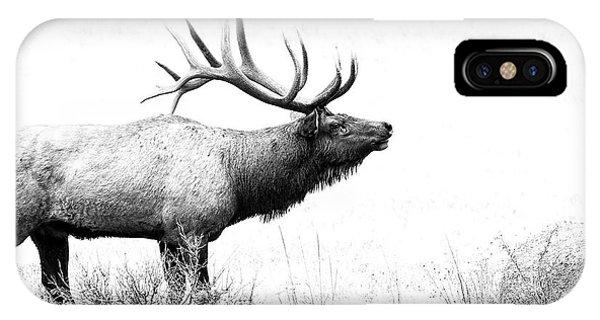 Bull Elk In Rut IPhone Case