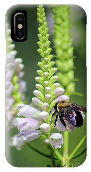 Bumblebee On Obedient Flower IPhone Case