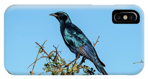 Burchell's Starling IPhone Case
