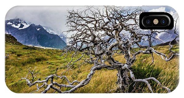 Burnt Tree, Torres Del Paine, Chile IPhone Case