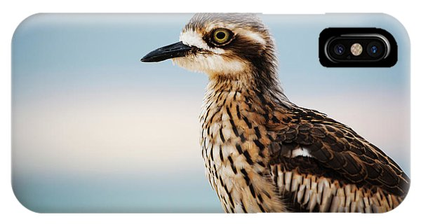 Bush Stone-curlew Resting On The Beach. IPhone Case