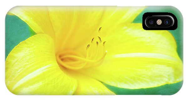 Buttered Popcorn Daylily In Her Glory IPhone Case