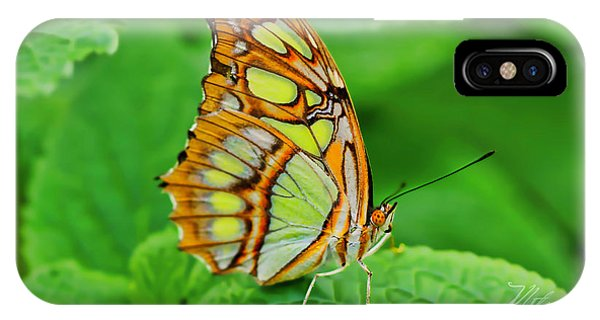 Butterfly Leaf IPhone Case