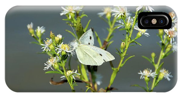 Cabbage White Butterfly On Flowers IPhone Case