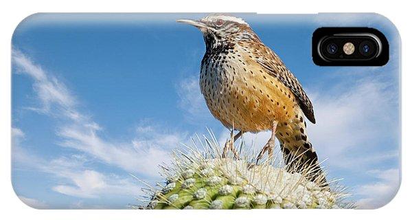 Cactus Wren On A Saguaro Cactus IPhone Case