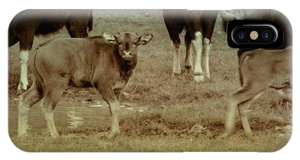 Calf Posing IPhone Case