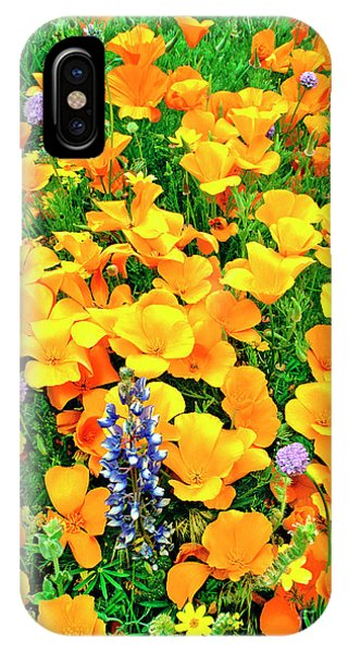 California Poppies And Betham Lupines Southern California IPhone Case