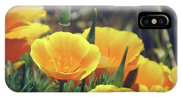 Californian Poppies In The Patagonia IPhone Case