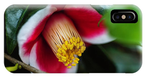 Camellia Bloom And Leaves IPhone Case