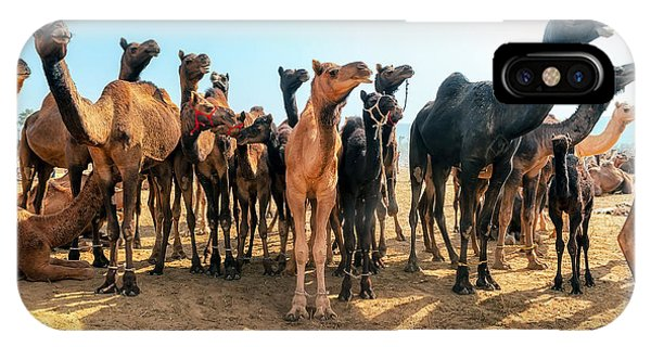 Fair iPhone Case - Camels by Banana Republic Images
