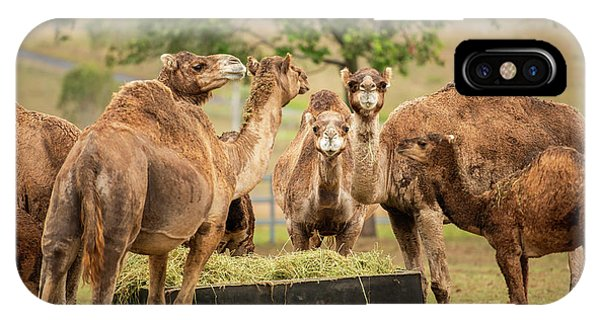 IPhone Case featuring the photograph Camels Out Amongst Nature by Rob D Imagery