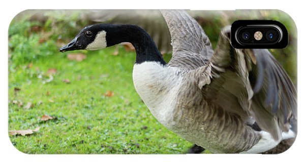 IPhone Case featuring the photograph Canadian Goose With Wings Stretched by Scott Lyons