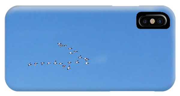 Canvasback Ducks IPhone Case